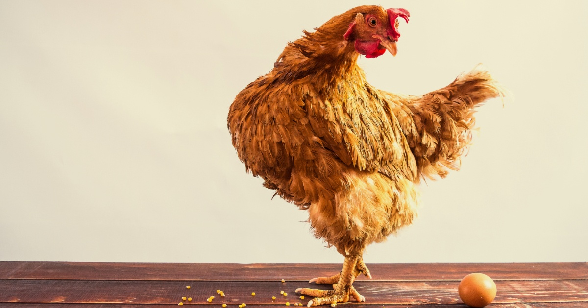 The Chicken or the Egg of Past Performance